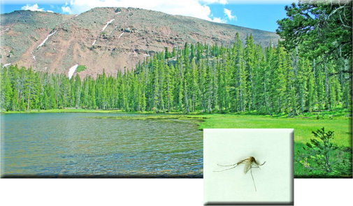 Insects - Camping - Love The Outdoors