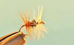 Renegade - Fly Tying - Love The Outdoors