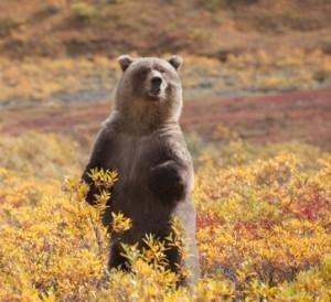 How To Avoid Wildlife Habitat When Finding Campsites