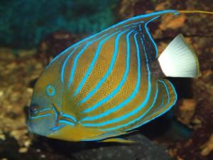 Outdoor Adventures: Exotic Fish Species in North America
