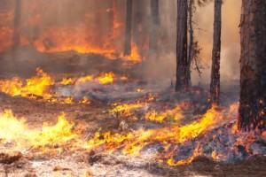 Outdoor Safety Tips: Dealing With Wildfires