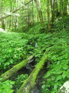 Bradley Fork and Chasteen Creek